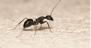 Winter Pest Management Tips for Your Hotel