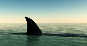 Starwood Hotels Announces Ban on Shark Fin